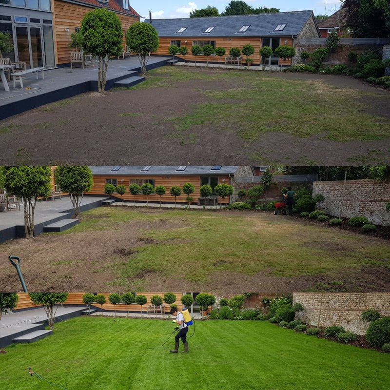 Before and After Lawn Renovation and Makeover in Chichester